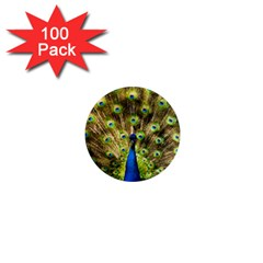 Peacock Bird 1  Mini Magnets (100 Pack)