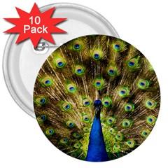 Peacock Bird 3  Buttons (10 Pack)