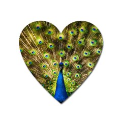 Peacock Bird Heart Magnet