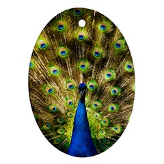 Peacock Bird Oval Ornament (two Sides)
