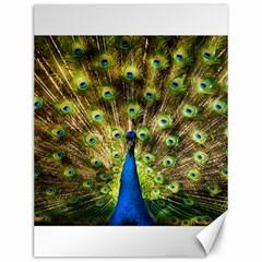 Peacock Bird Canvas 12  X 16
