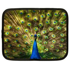 Peacock Bird Netbook Case (XXL)