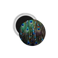 Peacock Jewelery 1 75  Magnets