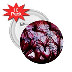 Jellyfish Ballet Wind 2 25  Buttons (10 Pack)