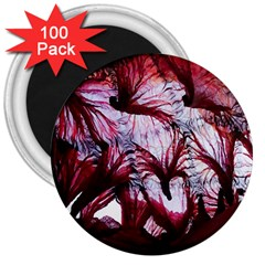 Jellyfish Ballet Wind 3  Magnets (100 pack)