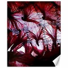 Jellyfish Ballet Wind Canvas 16  X 20