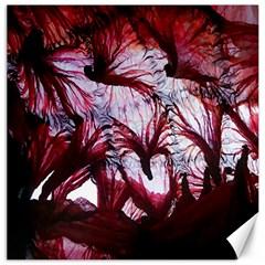 Jellyfish Ballet Wind Canvas 20  x 20