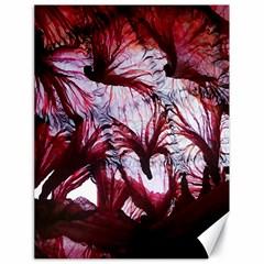 Jellyfish Ballet Wind Canvas 18  x 24