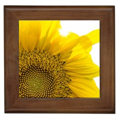 Plant Nature Leaf Flower Season Framed Tiles