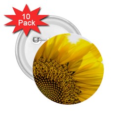 Plant Nature Leaf Flower Season 2 25  Buttons (10 Pack)