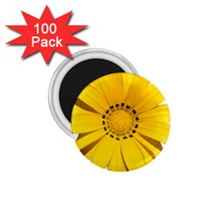 Transparent Flower Summer Yellow 1 75  Magnets (100 Pack)