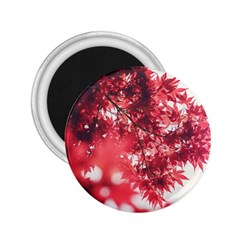 Maple Leaves Red Autumn Fall 2.25  Magnets