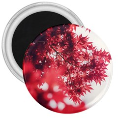 Maple Leaves Red Autumn Fall 3  Magnets