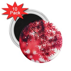 Maple Leaves Red Autumn Fall 2.25  Magnets (10 pack)
