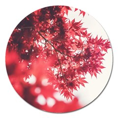 Maple Leaves Red Autumn Fall Magnet 5  (round)