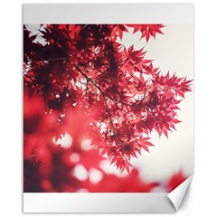 Maple Leaves Red Autumn Fall Canvas 16  x 20