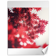 Maple Leaves Red Autumn Fall Canvas 36  x 48