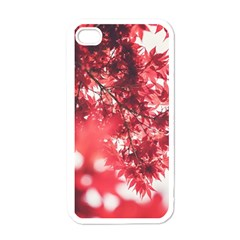 Maple Leaves Red Autumn Fall Apple iPhone 4 Case (White)