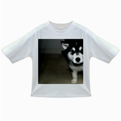 Alaskan Malamute Pup 3 Infant/Toddler T-Shirts