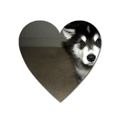 Alaskan Malamute Pup 3 Heart Magnet