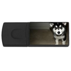 Alaskan Malamute Pup 3 USB Flash Drive Rectangular (2 GB)