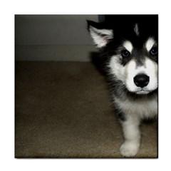 Alaskan Malamute Pup 3 Face Towel