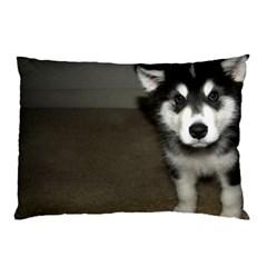 Alaskan Malamute Pup 3 Pillow Case