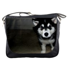 Alaskan Malamute Pup 3 Messenger Bags