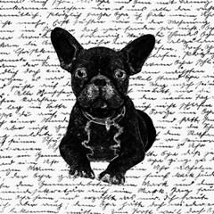 Cute Bulldog Canvas 12  X 12