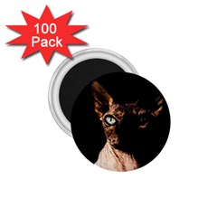 Sphynx cat 1.75  Magnets (100 pack)