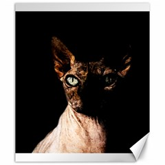 Sphynx cat Canvas 20  x 24