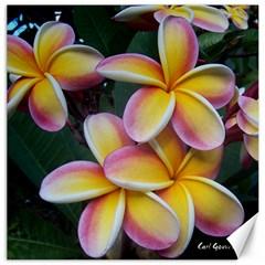 Premier Mix Flower Canvas 12  x 12