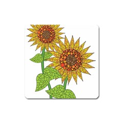 Sunflowers Flower Bloom Nature Square Magnet