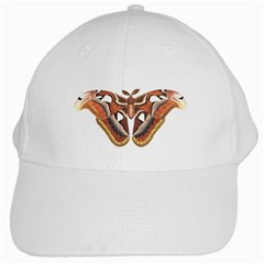 Butterfly Animal Insect Isolated White Cap