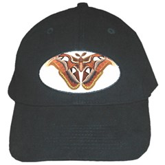 Butterfly Animal Insect Isolated Black Cap