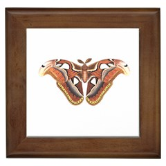 Butterfly Animal Insect Isolated Framed Tiles