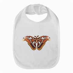 Butterfly Animal Insect Isolated Amazon Fire Phone
