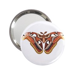 Butterfly Animal Insect Isolated 2 25  Handbag Mirrors