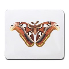 Butterfly Animal Insect Isolated Large Mousepads