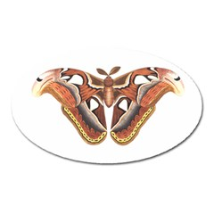 Butterfly Animal Insect Isolated Oval Magnet