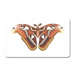 Butterfly Animal Insect Isolated Magnet (Rectangular)