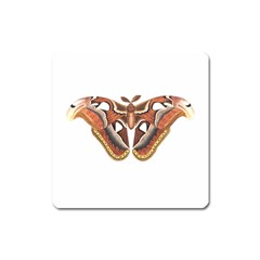 Butterfly Animal Insect Isolated Square Magnet