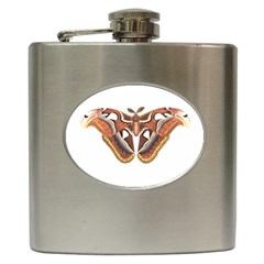 Butterfly Animal Insect Isolated Hip Flask (6 Oz)