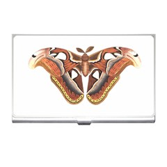 Butterfly Animal Insect Isolated Business Card Holders