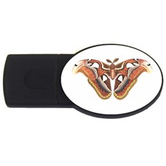 Butterfly Animal Insect Isolated USB Flash Drive Oval (1 GB)