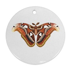 Butterfly Animal Insect Isolated Round Ornament (two Sides)