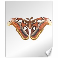 Butterfly Animal Insect Isolated Canvas 8  X 10