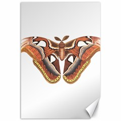 Butterfly Animal Insect Isolated Canvas 12  x 18