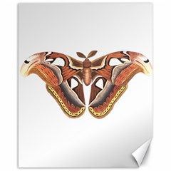 Butterfly Animal Insect Isolated Canvas 16  X 20