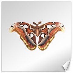Butterfly Animal Insect Isolated Canvas 20  X 20